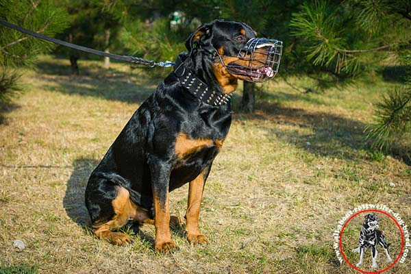 Lined with felt wire cage Rottweiler muzzle