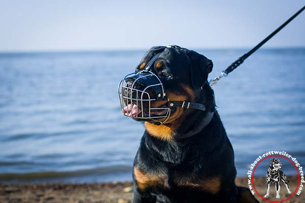 Easy-to-breath wire cage muzzle for Rottweiler