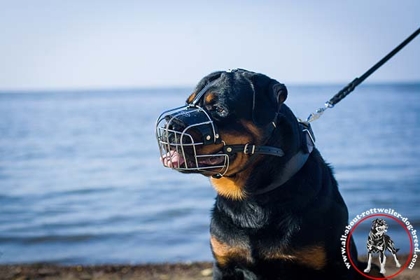 Wire dog muzzle for Rottweiler with nose padding