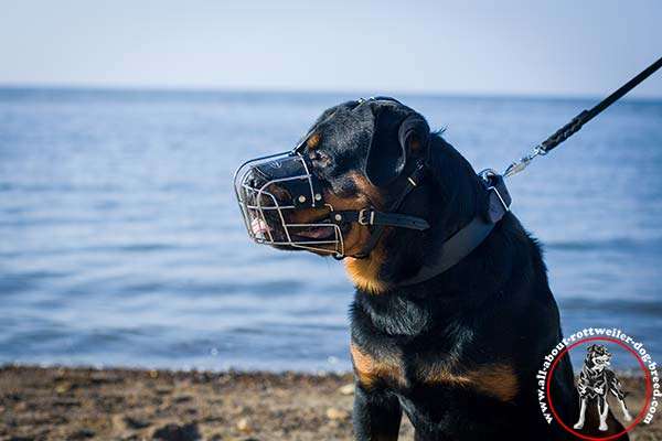 Wire dog muzzle for Rottweiler with padded leather lining