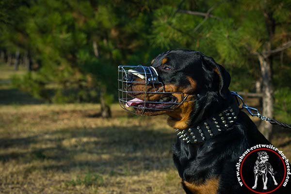 Wire dog muzzle for Rottweiler effective training