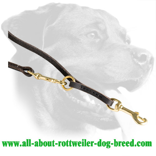 Brass Snap Hooks and Rings of Leather Rottweiler Leash