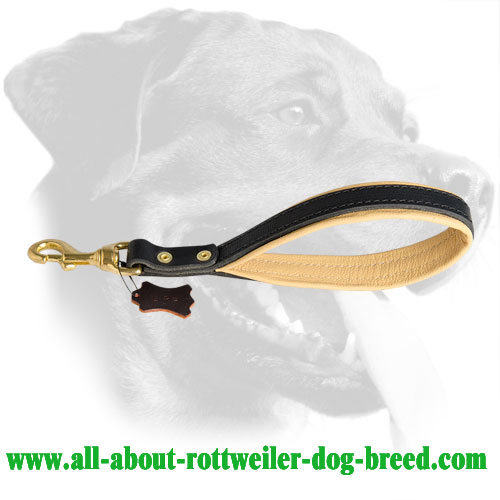Perfect Rottweiler Leather Leash for Training