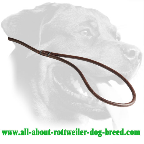 Leather Handle of Rottweiler Dog Show Leash