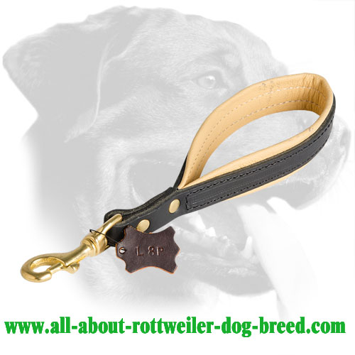 Leather Rottweiler Collar Equipped with Loop Handle