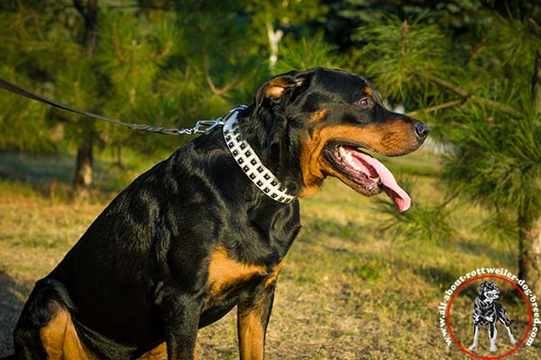 Rottweiler leather leash with durable hardware for daily walks