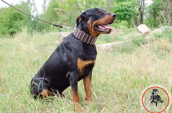 Rottweiler leather leash with rust-proof nickel plated hardware for police work