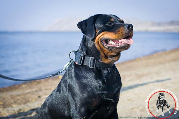 Rottweiler nylon leash with rustless hardware for improved control