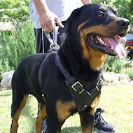 Rottweiler leather dog harness - padded chest harness