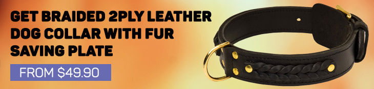 Braided 2 Ply Leather Collar for Rottweiler