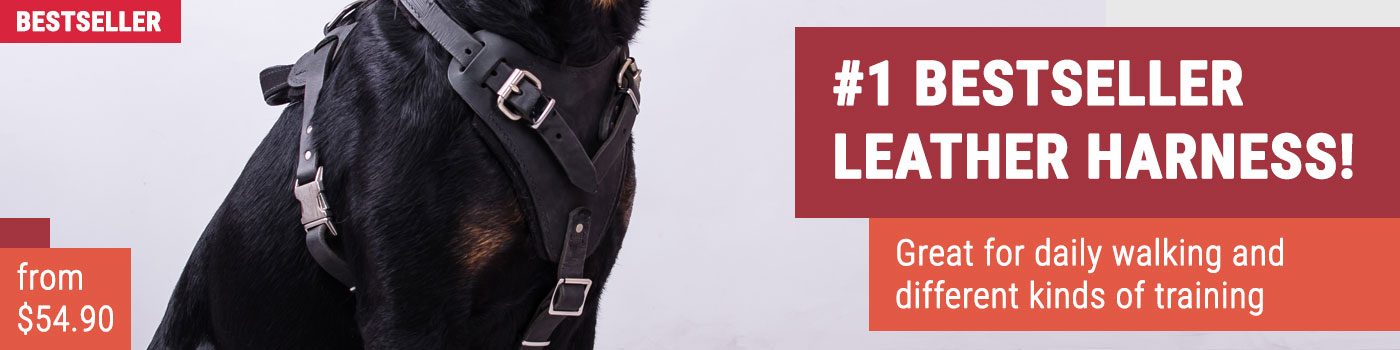 Classic Leather Rottweiler Harness for Attack Training and Everyday Walking