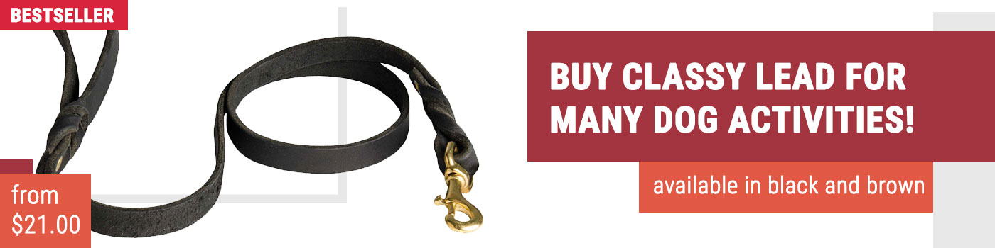 Classy Rottweiler Leather Leash for Walking and Training